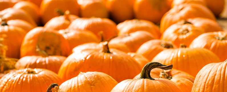 Where to Go Pumpkin Picking Near Cheshunt